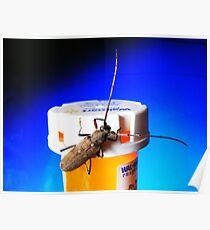 Bug on Drugs (:>) Poster