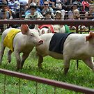 Pig Racing. 2012 Royal Canberra Show by Kate Howarth
