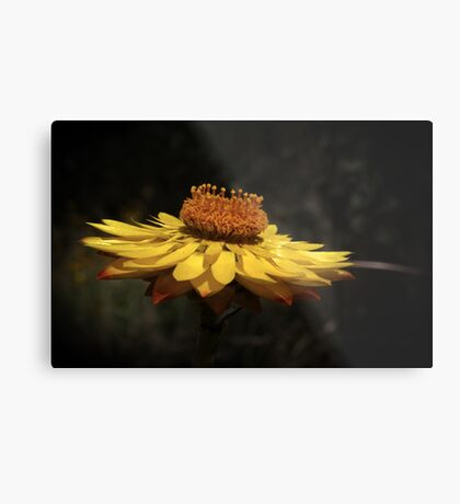 wildflower weekend Metal Print