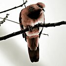Dove - iPhone Case by Craig Shillington