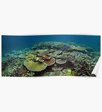 Mac's Reef I Poster