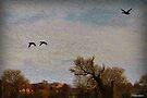 Flying Ducks by naturelover
