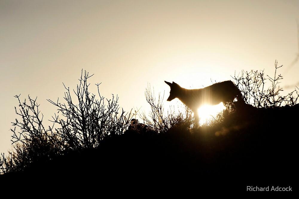 dusk patrol by Richard Adcock