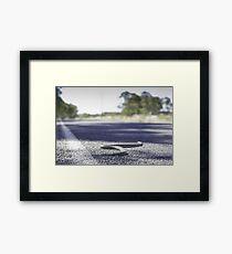 Road Kill Framed Print