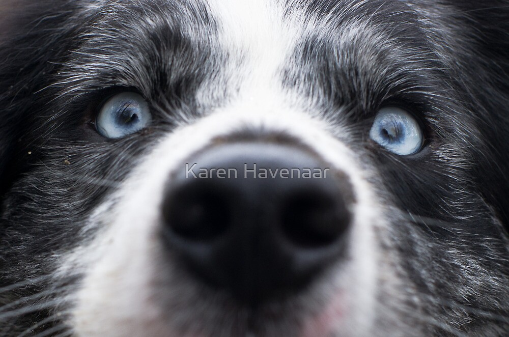 Blue Eyes by Karen Havenaar