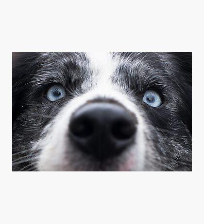 Blue Eyes Photographic Print