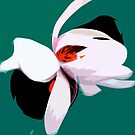Magnolia by Craig Hewitt