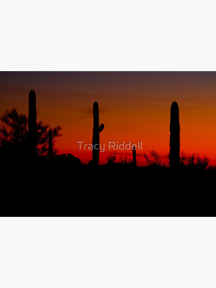 Cacti in the Red by taos