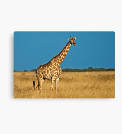 Lonesome beauty Canvas Print