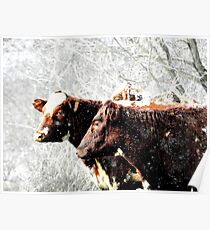 snow cows Poster