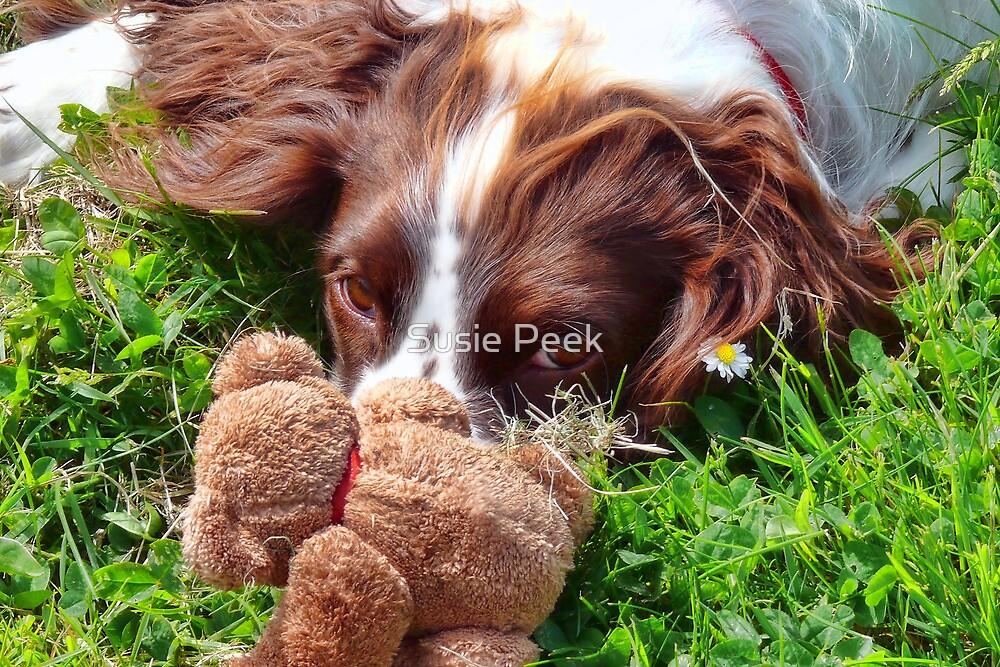Hiding Behind Teddy :) by Susie Peek