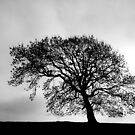 The Tree by mikebov