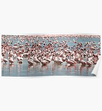 Flamingos and Flamingos..... Poster