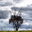 Canola-Tree - iPhone Case by Craig Shillington
