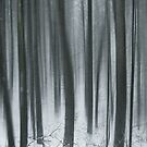 Cold Wood by zdepe