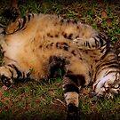 Tummy Rub Time by SylanPhotos