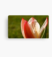 Tulip Split Canvas Print