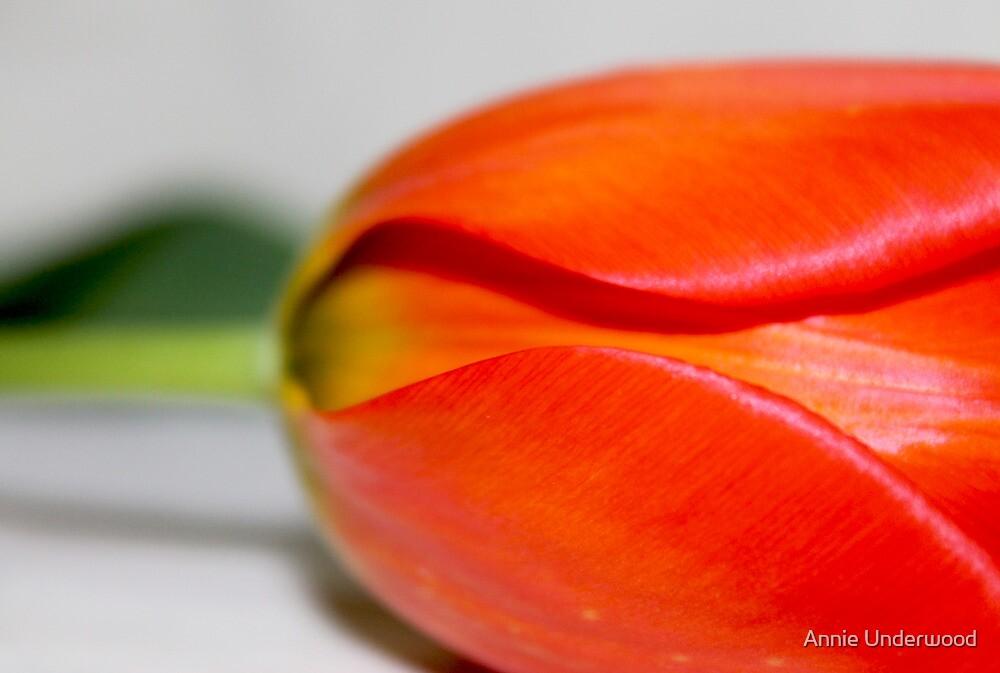 Tulip's Bottom Half by Annie Underwood