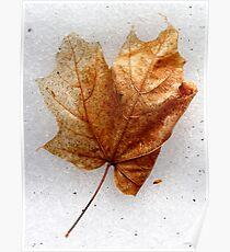 Orange Maple Leaf Poster