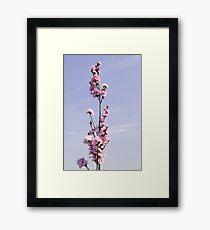 Spear Framed Print