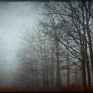 Trees in Fog by Debra Fedchin