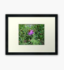 SKIPPERS IN THISTLE Framed Print