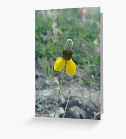 Prairie Coneflower Greeting Card