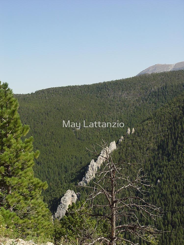 DRAGONTEETH by May Lattanzio
