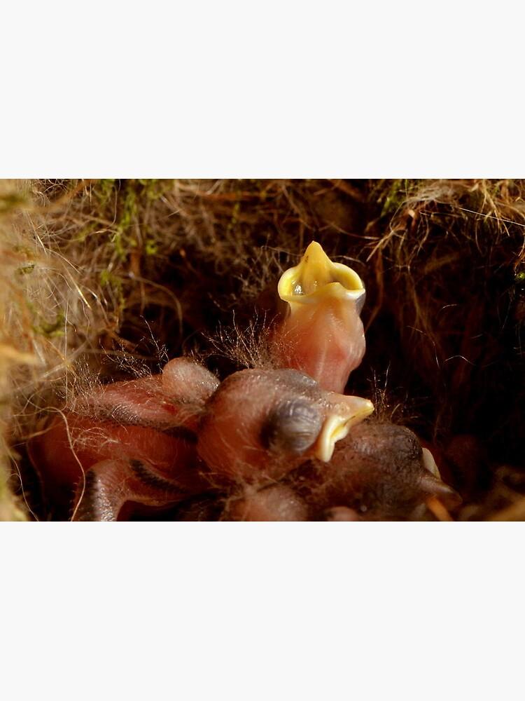 BABY BIRDS von RoseMarie747