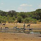 Hwange magic by Explorations Africa Dan MacKenzie