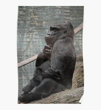 Colo the Gorilla 2 Poster