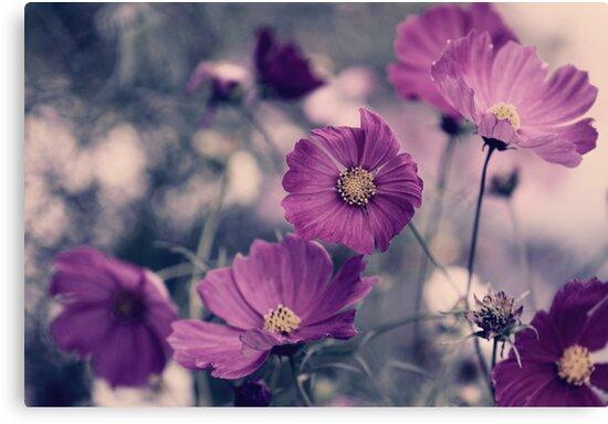 A Garden of Purple by yolanda