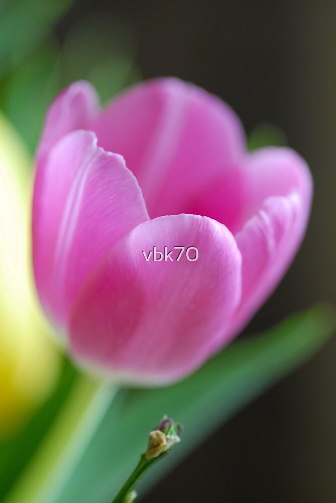 Kind & Gentle IV by vbk70
