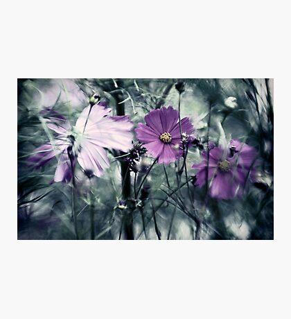 Garden of Eden Photographic Print