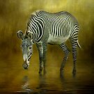 Zebra Crossing by Brian Tarr