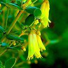 Garden Bells by Matt Hill