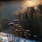 Winter garden by Michel Raj