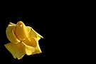 Yellow Rose by Debbie Pinard