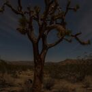 Joshua Tree at night by Gosha Davis