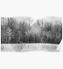 Trees Along A Meadow Poster