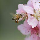buzzin by katpartridge