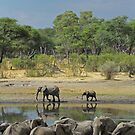 Hwange waterhole by Explorations Africa Dan MacKenzie