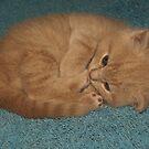 Kitten 02 by Glen Allen