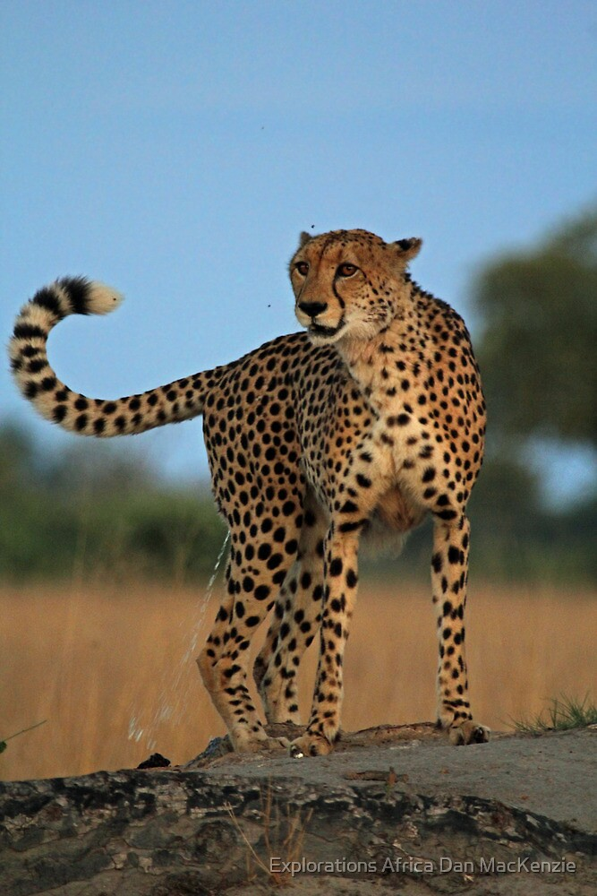 Marking territory by Explorations Africa Dan MacKenzie