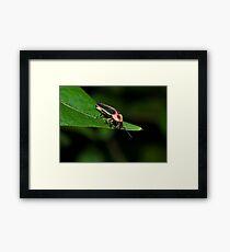 Lighting Bug Framed Print