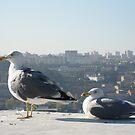 Seagulls by Emazevedo