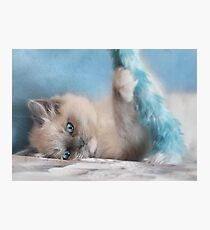 Playtime with Chianti Photographic Print