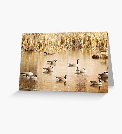 Geese On A Golden Pond Greeting Card