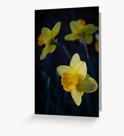 Spring Triplets Greeting Card