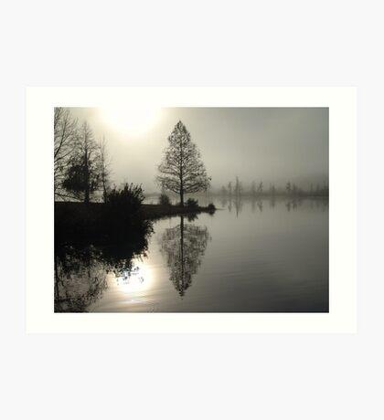 Cypress in the Fog  Art Print